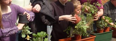 Comment réussir ses jardinières - J. Dubois Horticulteur - Béthune