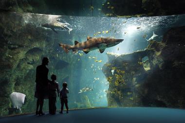 amphithéatre des requins (c) aquarium la rochelle SAS.jpg