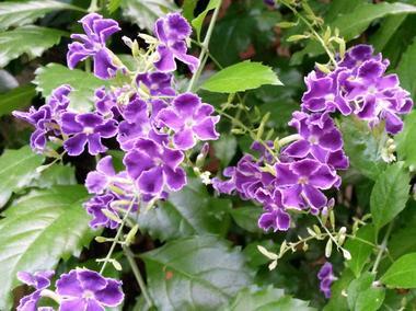 jardin-papillons-vannes (2).jpg