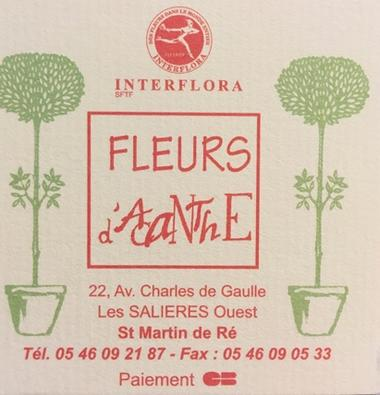 Fleurs-d-Acanthe-saintmartindere-iledere-1.jpg