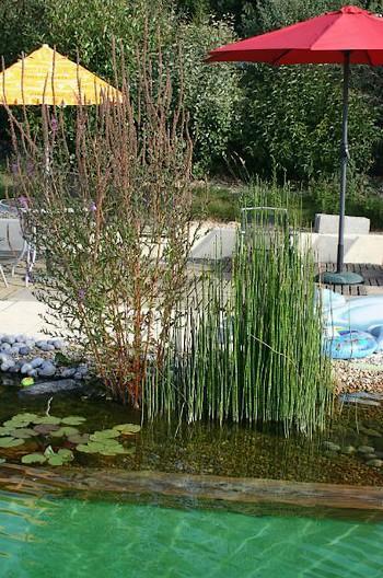 piscine naturelle-sit.jpg
