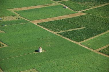 Vue aérienne de vignes de Anglars-Juillac--Lot Tourisme-ECAV aviation-Michel Bernard.jpg