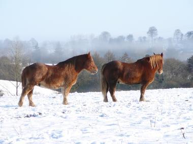 Ferme_Equestre_Chimeres_LeSaint (4).JPG