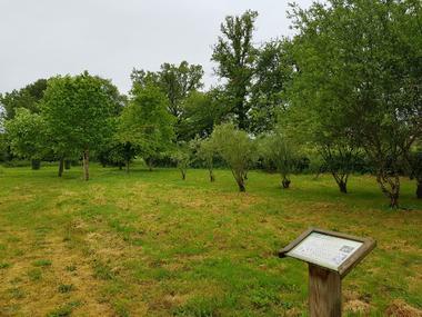 Arboretum - La Bussière ©OTVG (1).jpg