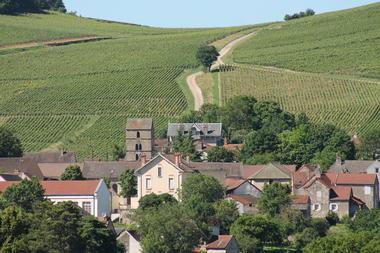Mercurey-vins-vignes-paysages-OT (1).JPG