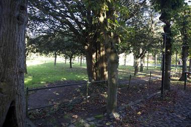 abbayestdenis-arbres (2).jpg