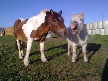 club hippique argentonnais poneys-internet.jpg