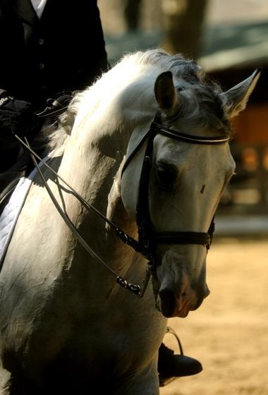 Rencontres Equestres1.jpg