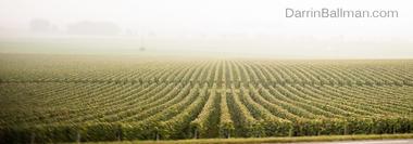 Art-In-The-Harvest-Darrin-Ballman-Commercial-Photography-9215_WEB_LOGO.JPG