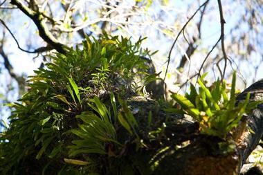 La végétation est endémique et luxuriante avec de nombreuses espèces d'orchidées