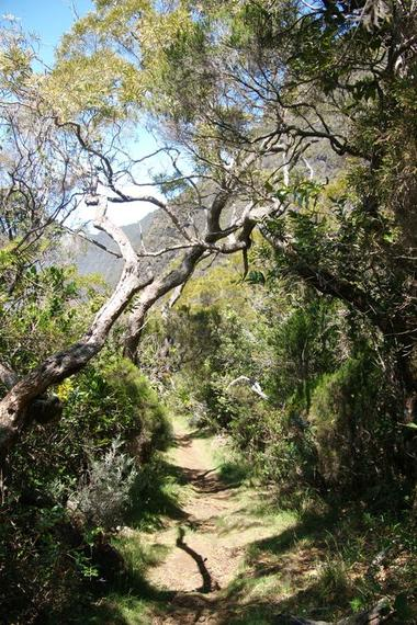 Le sentier après le Mapou, première partie de la descente de la vallée sur le fond plat : pente du Nez de Boeuf