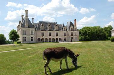 Ballade à  dos d'Âne devant le château de Beauregard