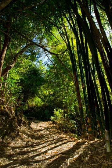 Le sentier jusqu'au pied du piton d'Enchaing