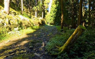 Les passages glissants sur les planches de bois ou sur les roches recouvertes de mousse se succèdent