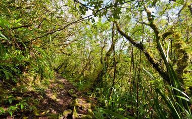 La forêt primaire dans la descente finale vers la rivière du Mât et source Manouilh