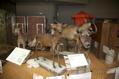 muséesciencesnaturelles-expos-mons.jpg