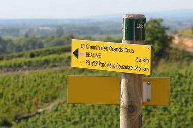 Vue sur Pommard-©OTI/Image&Associés