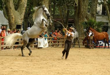 Rencontres Equestres5.jpg