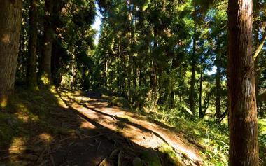 Le sentier suit une piste forestière pendant quelques centaines de mètres