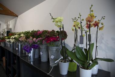 atelierkla-fleur-mons.jpg
