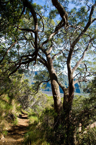Le début de la superbe forêt de tamarins des hauts