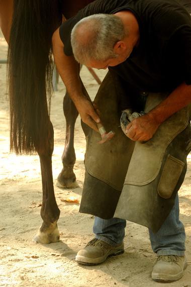 Rencontres Equestres3.jpg