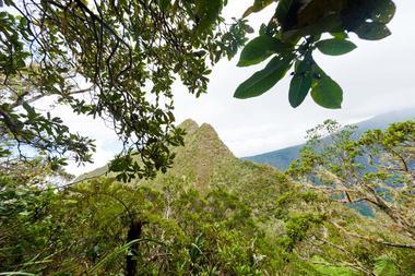 La forêt primaire entre 1500 et 1800 m d'altitude