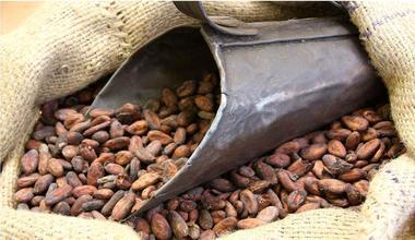 Feves de cacao - Chocolat Max Vauché