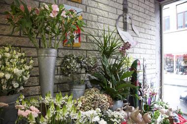 floribel-fleurs5-mons.jpg