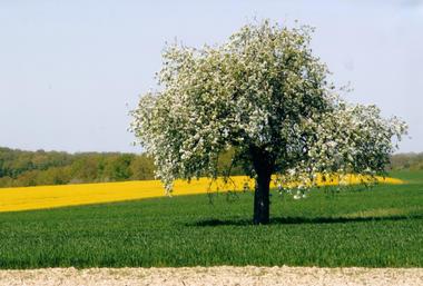 Fruitier en Fleurs.jpg