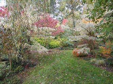 jardindecistus-arbres6-sit.jpg