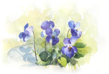 3 violettes 15_1000pix.jpg
