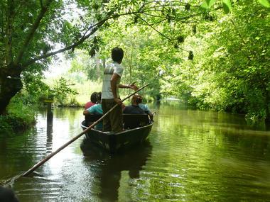 Barque marais.jpg