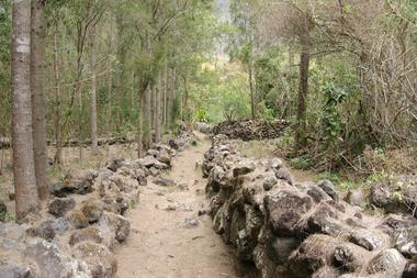 Le sentier après la pente à Cascade et avant la traversée à sec de la rivière des Remparts : les murets des enclos à bestiaux.
