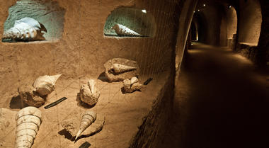 Coquillages Cave (10 sur 30).jpg