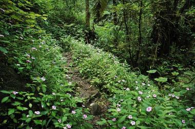 Le sentier vers les cascades du Bras d'Annette