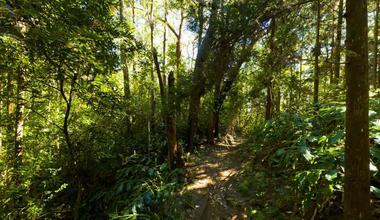 La montée continue dans un sous bois épais
