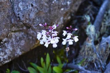 Quelques fleurs adaptées à l'altitude et à la sécheresse