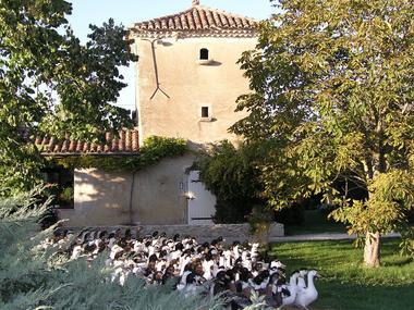 Collection Tourisme Gers/Terre Blanche/Joutet