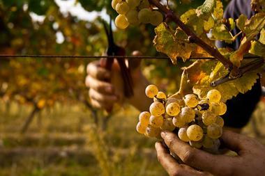 Vignoble de l'armagnac