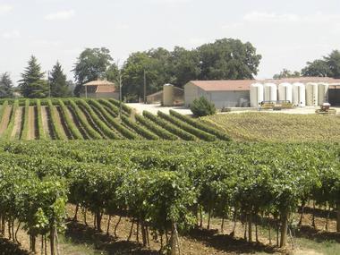 Vignoble et chai