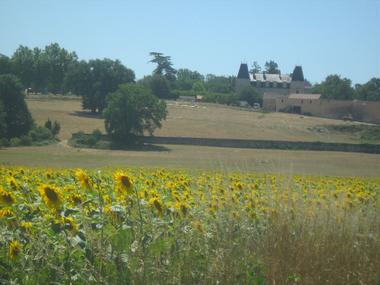 Collection Tourisme Gers/Camping les Alisiers