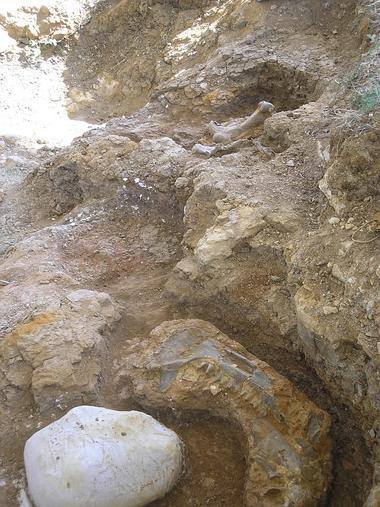 Collection Tourisme Gers/Site Paléontologique/Y. Laurent