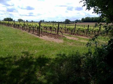 Vue sur le vignoble du Gers