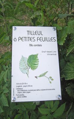 Arboretum_tilleul < Vervins < Aisne < Picardie