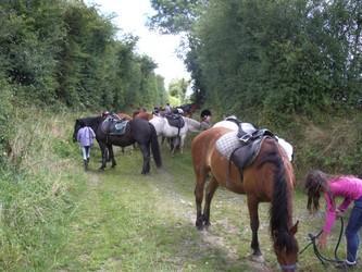 Bois Cama 2<Brunehamel<Aisne<Picardie
