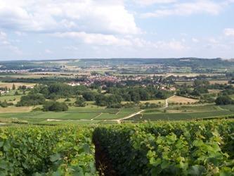 Champagne Olivier Bertrand < Trélou-sur-Marne < Sud de l'Aisne < Aisne < Picardie