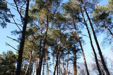 Forêt domaniale de Vauclair < Bouconville-Vauclair < Aisne < Picardie