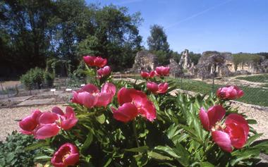 Jardin de Vauclair_Fleurs < Bouconville-Vauclair < Aisne < Picardie