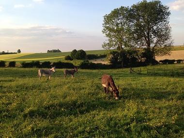 Le Gîte du Joli Mai anes < Vaux Andigny < Aisne